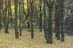 Bakgrunder för trä för gräsplan för höst för natur för skogträd Arkivbild