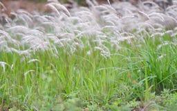 Bakgrunder: Frodiga växter i sommar Arkivbild