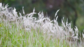 Bakgrunder: Frodiga växter i sommar royaltyfri fotografi