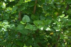 Bakgrunder 065 - i trädgårdskott Arkivfoto
