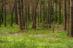 bakgrunder sörjer praktiskt trä Royaltyfri Fotografi
