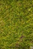 Bakgrunder som textureras, mossa Royaltyfria Foton