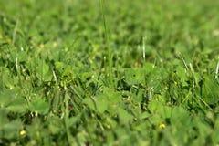 bakgrunder stänger upp ny gräsgreen för snitt Arkivbild