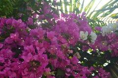 Bakgrunder 037 - växer Beautifully det höga trädet och solblickarna till och med bästa hög trädmaterielbild med rosa blommor Arkivbild