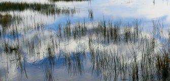 Bakgrundsabstrakt begrepp av gräs, blå himmel och moln Arkivfoto