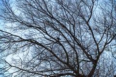 Bakgrundsaffisch - träd i den Combe dalen nära Bexhill, East Sussex, England royaltyfri foto