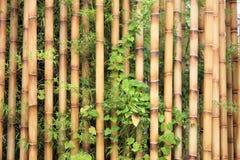 bakgrundsbambu Royaltyfria Foton