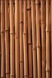 bakgrundsbambu arkivfoto