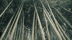 bakgrundsbambuskog Arkivbild