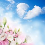 bakgrundsbanret blommar datalistor little rosa spiral Royaltyfria Foton
