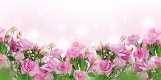 bakgrundsbanret blommar datalistor little rosa spiral stock illustrationer