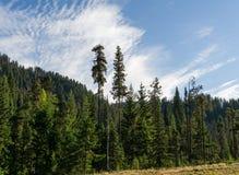 Bakgrundsbarrskog med blå himmel och moln i British Columbia Kanada Arkivbilder