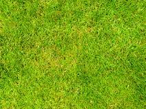 Bakgrundsbild av ett gräsfält Royaltyfria Bilder