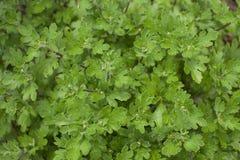Bakgrundsbild av gröna växter placera text Royaltyfri Fotografi