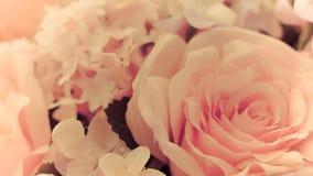 Bakgrundsbild av rosa rosor Arkivbild