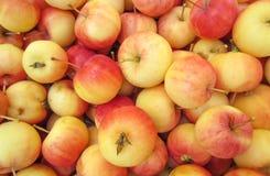 Bakgrundsbild för lösa äpplen Arkivbild
