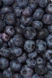 bakgrundsblåbär Arkivfoton