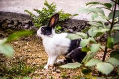 bakgrundsblack som isoleras över kaninwhite Arkivfoto