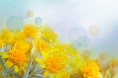 bakgrundsblomma Royaltyfria Bilder
