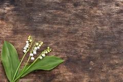 Bakgrundsblommor av liljekonvaljer på en gammal träyttersida Arkivfoto