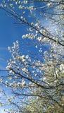 bakgrundsblomningblomman blommar skywhite royaltyfri bild