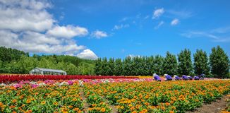 bakgrundsblomningblomman blommar skywhite Arkivbild