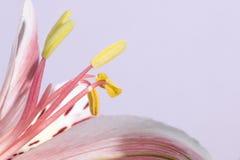 bakgrundsblomningblomman blommar skywhite Arkivfoton