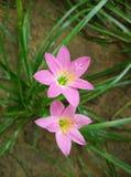 bakgrundsblomningblomman blommar skywhite Arkivfoto