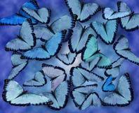 bakgrundsbluefjärilar Arkivfoto
