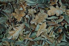 bakgrundsbluen låter vara oakskyen royaltyfria bilder