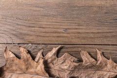 bakgrundsbluen låter vara oakskyen Royaltyfri Fotografi