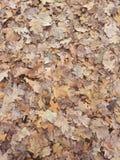 bakgrundsbluen låter vara oakskyen Arkivfoton