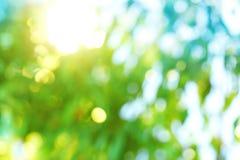 Bakgrundsblur av naturen Royaltyfri Fotografi