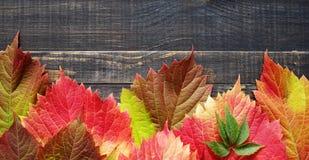 bakgrundsbrädet för 8 höst färgade träbland annat leaves för eps mappen Royaltyfri Foto