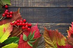 bakgrundsbrädet för 8 höst färgade träbland annat leaves för eps mappen Royaltyfri Fotografi