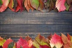 bakgrundsbrädet för 8 höst färgade träbland annat leaves för eps mappen Arkivfoto