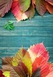 bakgrundsbrädet för 8 höst färgade träbland annat leaves för eps mappen Fotografering för Bildbyråer