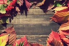 bakgrundsbrädet för 8 höst färgade träbland annat leaves för eps mappen Royaltyfria Foton