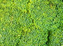 bakgrundsbroccoli Arkivbilder