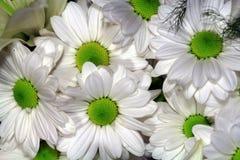 Bakgrundsbukett av vita blommor Royaltyfri Foto
