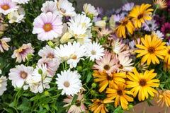 bakgrundsbuketter cards den dekorativa blom- vektorn för blommaillustration två Royaltyfria Bilder