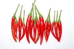 bakgrundschilien pepprar röd white isolerad ny varm chili Arkivbilder