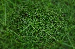 bakgrundsclosegräs upp Royaltyfri Foto