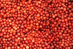 bakgrundscranberries Royaltyfri Fotografi