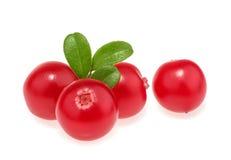 bakgrundscranberries fokuserar isolerade naturliga grunda vita källvitaminer för makroen royaltyfri bild