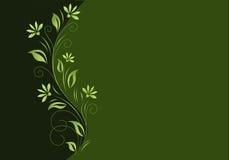 bakgrundsdark - green Royaltyfri Fotografi