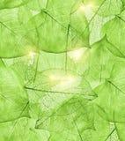 bakgrundsdark - greenleaves Arkivfoto