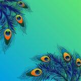 Bakgrundsdesign med påfågelfjädrar Arkivfoton