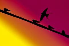 bakgrundsfågelflyg Royaltyfria Bilder