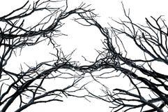 bakgrundsfilialer isolerade naturlig treewhite Arkivfoton